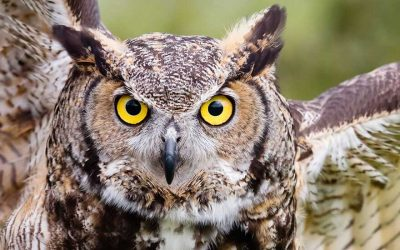 The Owl of OnVerWag is at Your Service